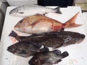 8鮮魚セット2014228