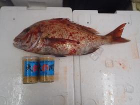 7鮮魚セット2014331
