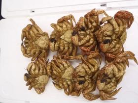 1とげくり蟹2014430