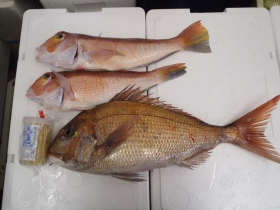 2鮮魚セット2014430