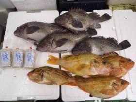 6鮮魚セット2014430