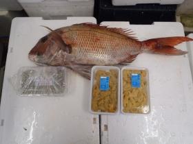 10鮮魚セット2014430