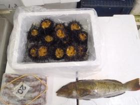 1鮮魚セット201469
