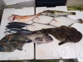 4鮮魚セット201469