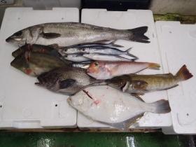 3鮮魚セット201469