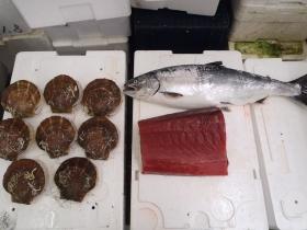 10鮮魚セット201469