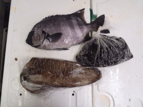 16鮮魚セット201469