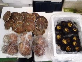 4鮮魚セット2014620