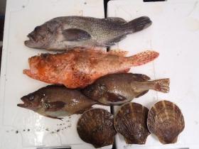 9鮮魚セット2014620