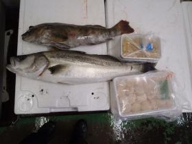 14鮮魚セット2014620