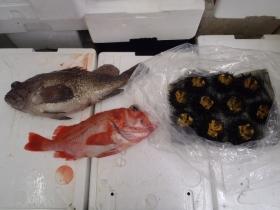 13鮮魚セット2014623
