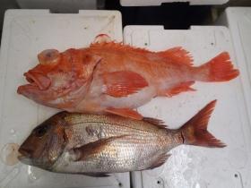 15鮮魚セット2014623