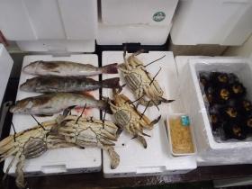 8鮮魚セット2014621
