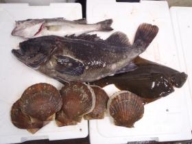 7鮮魚セット2014621