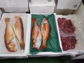 2鮮魚セット2014624