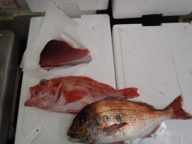 5鮮魚セット2014624