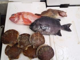 9鮮魚セット2014624