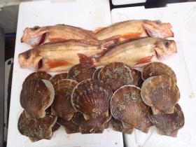 8鮮魚セット2014624