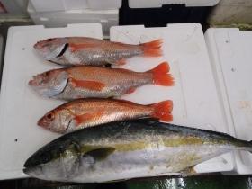 5鮮魚セット2014627