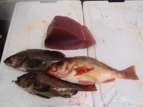 15鮮魚セット2014627