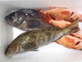 2鮮魚セット2014630