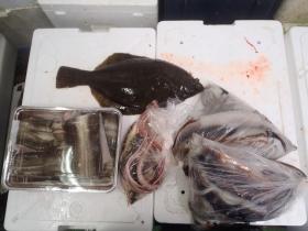 22鮮魚セット2014731