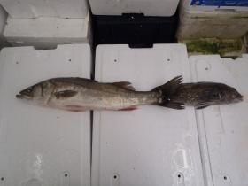 4鮮魚セット2014818