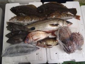6鮮魚セット2014818