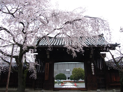 IMG_5711 妙覚寺