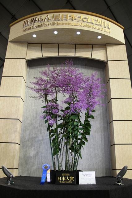 日本大賞花 エピデンドラム アタカゾイカム 'マウント イイズナ'