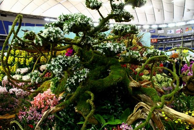 オープンクラス最優秀賞 「蘭の楽園」岐阜県立恵那農業高校(苔むした樹)