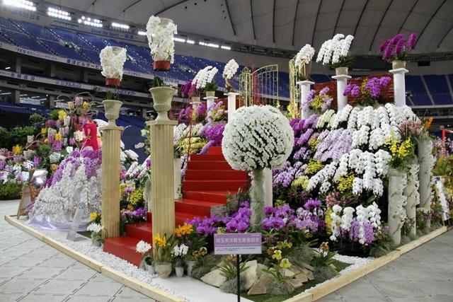 オープンクラス奨励賞 「天国への階段」 埼玉県洋蘭生産者組合