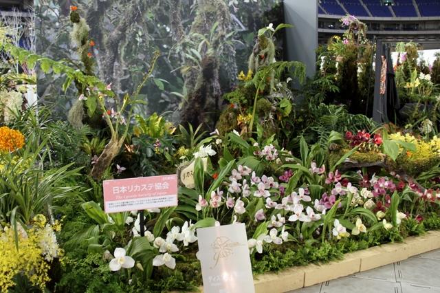 オープンクラス奨励賞 「リカステの森」日本リカステ協会