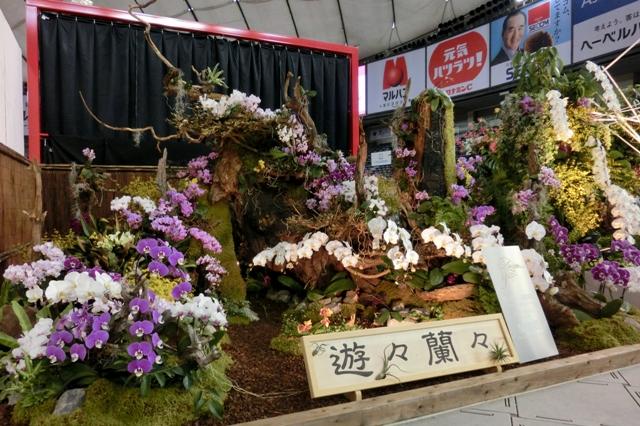 オープンクラス 奨励賞 「遊々蘭々」 椎名洋ラン園