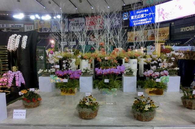 オープンクラス 奨励賞 「オーキッドパレード」 須和田農園
