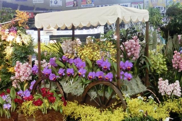 オープンクラス 奨励賞 「花屋の夢」 石井洋蘭園