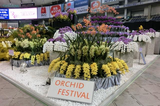 オープンクラス 奨励賞 「ORCHID FESTIVAL」 千葉県洋らん生産者組合