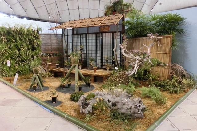 オープンクラス トロフィー賞 「蘭と酔しれて」 日本東洋蘭協会