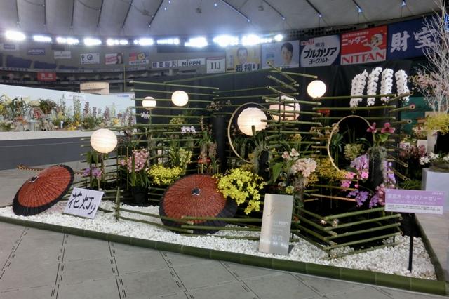 オープンクラス 奨励賞 「花灯り」 東京オーキッドナーセリー