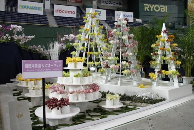 オープンクラス トロフィー賞 「Shining Star」 相模洋蘭園 & αオーキッド