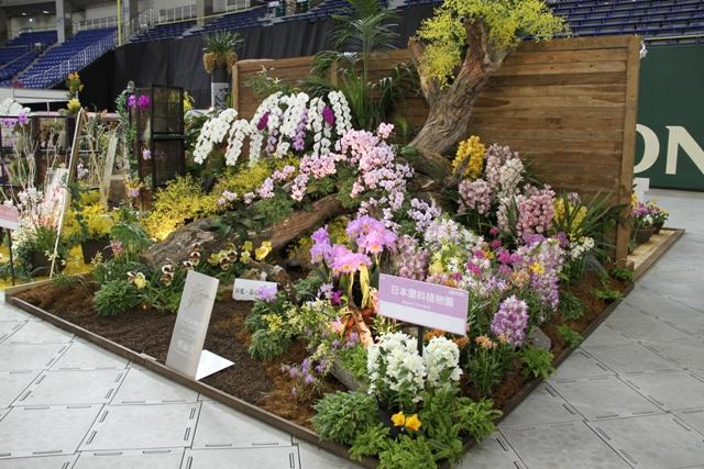 オープンクラス 奨励賞 「日光・春らんまん」 日本蘭科植物園