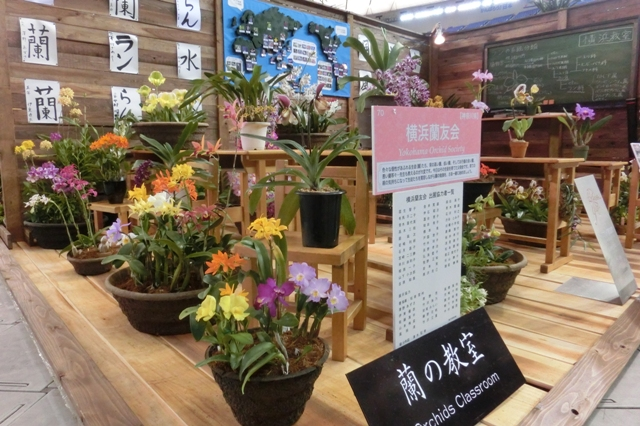 愛好家クラス 奨励賞 「蘭の教室」 横浜蘭友会