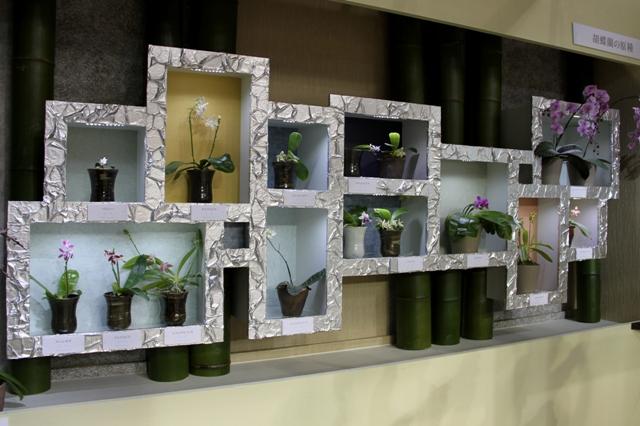 胡蝶蘭の原種