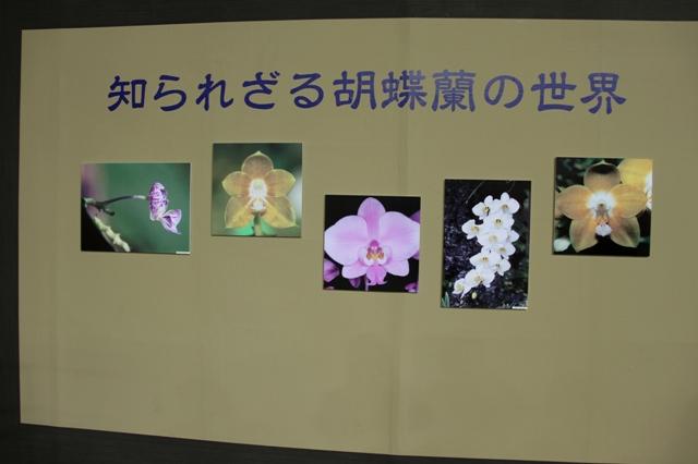 知られざる胡蝶蘭の世界