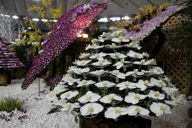 白花の胡蝶蘭で作った懸崖