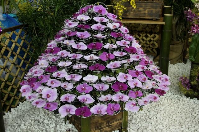 ピンクの胡蝶蘭で作った懸崖