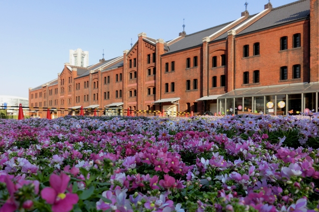 Flower Garden 2014(ピンクのネメシア)