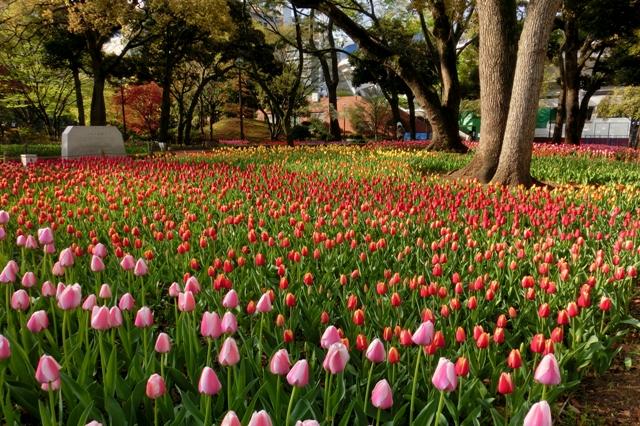 第36回 よこはま花と緑のスプリングフェア2014