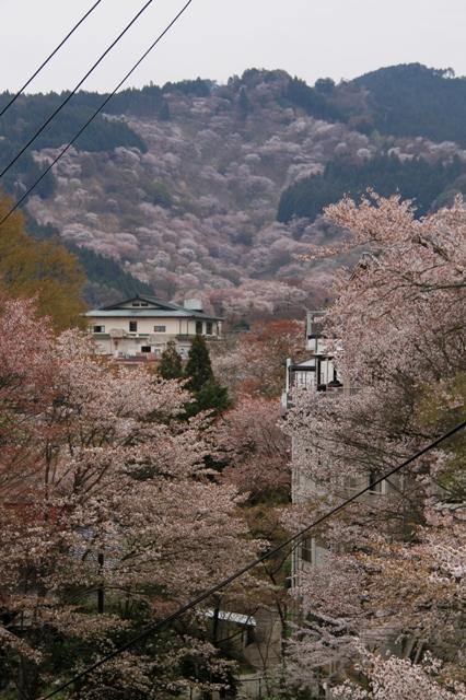 桃源郷ならぬ桜の里