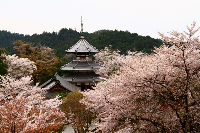 蔵王堂から見る南朝妙法殿
